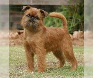 Small #2 Breed Brussels Griffon image