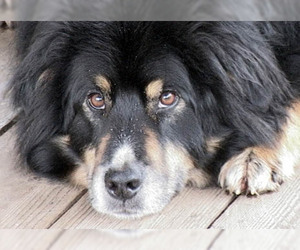 20  Crossbreed Dogs That Will Make You Fall In Love With Mutts ...