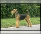 Image of Breed Group Terrier