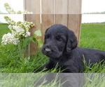 Small #20 Breeder Profile image