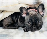 Small Photo #12  Breeder Profile in LOS ANGELES, CA, USA