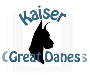 Great Dane Breeder in NEENAH, WI