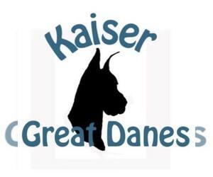 Main photo of Great Dane Dog Breeder near NEENAH, WI, USA