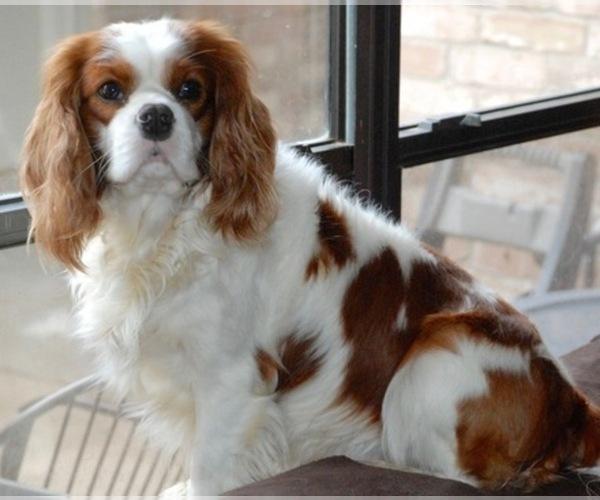 Medium Photo #1  Breeder Profile in MONTGOMERY, TX, USA