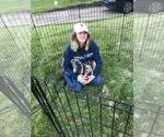 Siberian Husky Breeder in BRENTWOOD, PA, USA