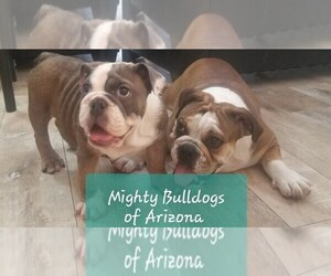 Main photo of English Bulldog Dog Breeder near SUN CITY, AZ, USA
