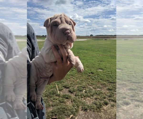 Medium Photo #5  Breeder Profile in OBLONG, IL, USA