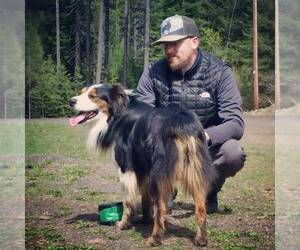 Australian Shepherd Breeder in PENDLETON, OR, USA
