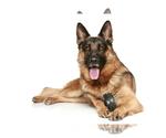 German Shepherd Dog Breeder in LOS ANGELES, CA, USA