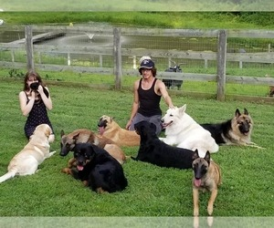 Belgian Malinois Dog Breeder near DOWNINGTOWN, PA, USA