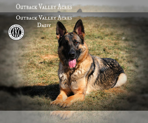 German Shepherd Dog Dog Breeder near LISBON, OH, USA
