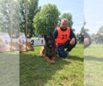 German Shepherd Dog Breeder in CONCORD TWP, OH, USA