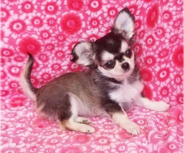 Medium Photo #13  Breeder Profile in BELLE CENTER, MO, USA