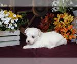Small #92 Breeder Profile image