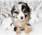 Small Photo #7  Breeder Profile in CHICKASHA, OK, USA