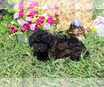 Small #50 Breeder Profile image