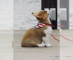 Small Photo #1  Breeder Profile in HARRAH, OK, USA