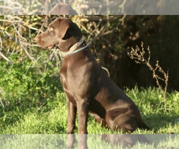 Medium Photo #1  Breeder Profile in REXBURG, ID, USA