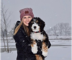 Bernedoodle Dog Breeder in GLOUSTER,  USA
