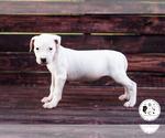 Small Photo #1  Breeder Profile in MEMPHIS, TN, USA