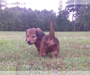 Main photo of  Dog Breeder near HEBER SPRINGS, AR, USA