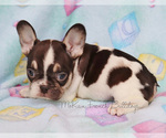 Small Photo #7  Breeder Profile in BELLE CENTER, MO, USA