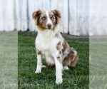 Small Photo #16  Breeder Profile in ROBERTS, IL, USA