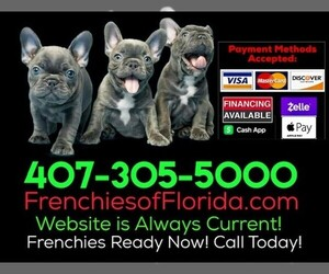 French Bulldog Dog Breeder in ORLANDO,  USA
