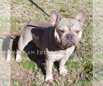 Small Photo #4  Breeder Profile in BELLE CENTER, MO, USA