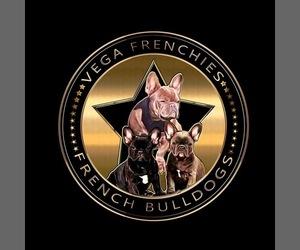 French Bulldog Dog Breeder in PUYALLUP,  USA