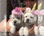 Small Photo #4  Breeder Profile in GLENDALE, CA, USA