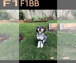 Small #47 Breeder Profile image