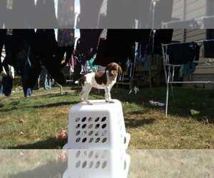German Shorthaired Pointer Dog Breeder in SAND LAKE,  USA