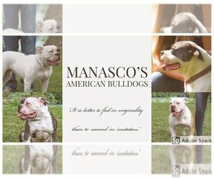 Main photo of American Bulldog Dog Breeder near JOLIET, TX, USA