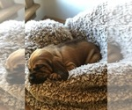Small Photo #1  Breeder Profile in MARSHFIELD, MO, USA