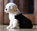 Small Photo #13  Breeder Profile in STANLEY, VA, USA