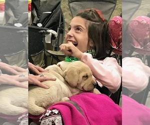 Labrador Retriever Dog Breeder in SPRINGFIELD,  USA