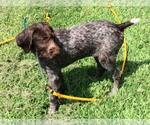Small Photo #4  Breeder Profile in PARSONS, KS, USA