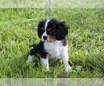 Small #77 Breeder Profile image