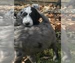 Small #53 Breeder Profile image