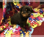 Rottweiler Breeder in JOPPA, MD, USA