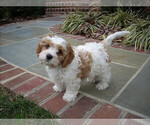 Small Photo #24  Breeder Profile in LISBON, OH, USA