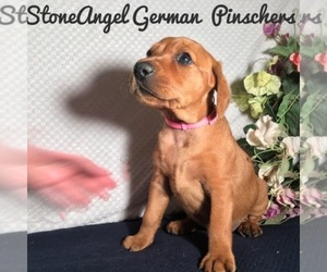 German Pinscher Dog Breeder in NORTH YARMOUTH,  USA