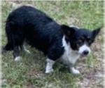 Small #60 Breeder Profile image