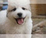 Small #40 Breeder Profile image