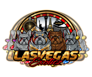 American Bully Dog Breeder in LAS VEGAS,  USA