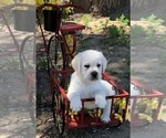 Small Photo #2  Breeder Profile in GLENDALE, CA, USA