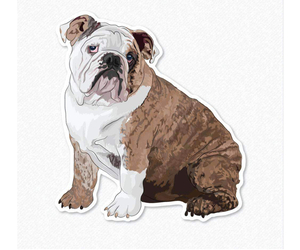 Main photo of Bulldog Dog Breeder near HARTFORD, CT, USA