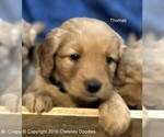 Small Photo #6  Breeder Profile in WACO, TX, USA