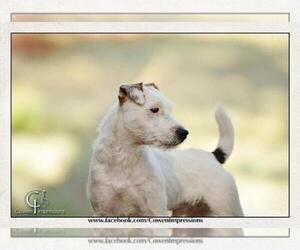 Main photo of Jack Russell Terrier Dog Breeder near FLAGSTAFF, AZ, USA